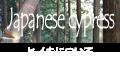 ヒノキ科ヒノキ属(桧・檜)などの針葉樹について
