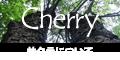ブラックチェリーやヤマザクラなどバラ科サクラ属の広葉樹について